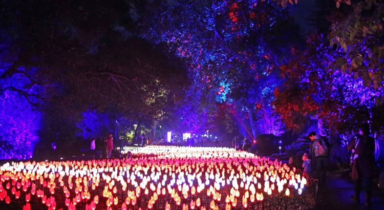 Garden Calendar: Garden light shows and free composting workshps