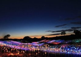 Paso Robles: Bruce Munro's 'Field of Light at Sensorio' extended